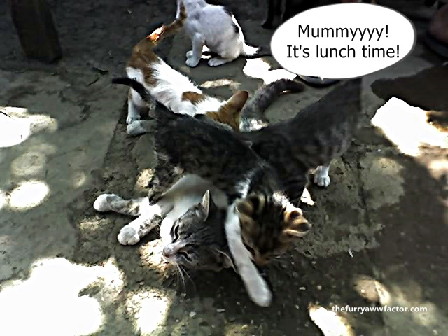 Cute Kittens and Their Mum