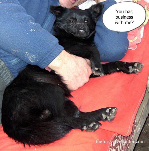 Grumpy Dog thefurryawwfactor.com
