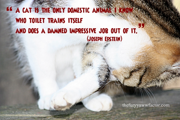 A Cat Is The Only Domestic Animal That Toilet Trains Itself thefurryawwfactor.com